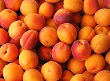 Photo of Apricots