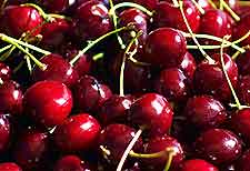Photo of Black Cherries