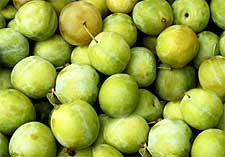Photo of Greengages