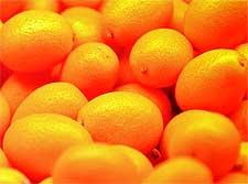 Photo of Kumquats