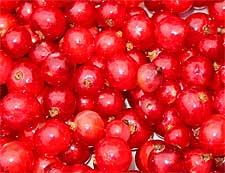 Photo of Redcurrants