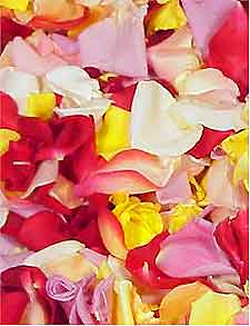 Photo of Rose Petals